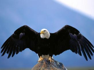 Image result for eagle talking to birds
